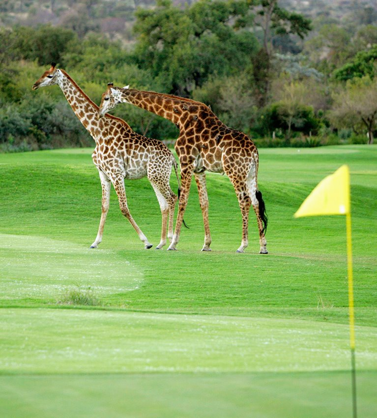 The animals of Leopard Creek